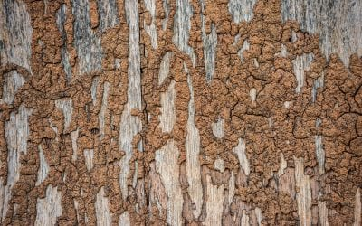 7 Common Signs of Termites in the Home